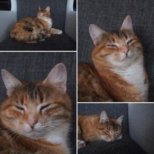 Katzenliebe: Unsere Glückskatze